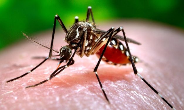 Obavijest o adulticidnom tretmanu komaraca na području Općine Donji Kraljevec